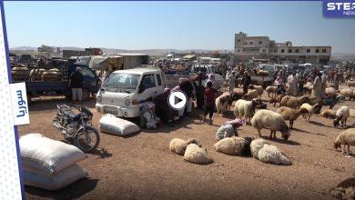 مع اقتراب عيد الأضحى .. أضاحي العيد تنتظر المشترين مع غياب القدرة الشرائية لسكان الشمال السوري