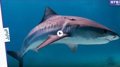شاهد|| سمكة قرش تهاجم رجل برازيلي مخمور دخل البحر لقضاء حاجته وتنهي حياته (فيديو وصور)