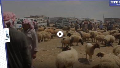 بالفيديو | انخفاض أسعار المواشي في البادية السورية مع انتعاش الأسواق قبل عيد الأضحى