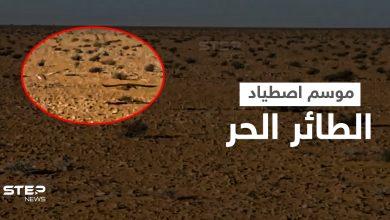 بالفيديو || كيف يُصطاد الطائر الحر في بادية الشامية بريف الرقة