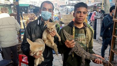 """مصر.. السلطات الأمنية تضبط حيوانات نادرة في """"سوق الجمعة"""" بالقاهرة"""